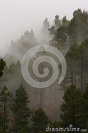 Free Mountain Mist Stock Photography - 434622
