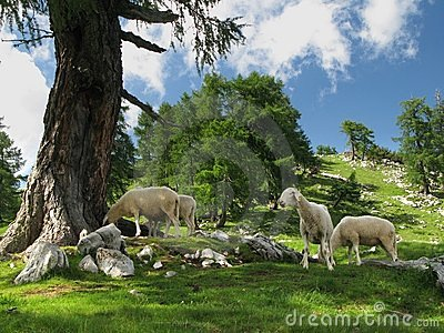 Mountain pasture in Julian Alps