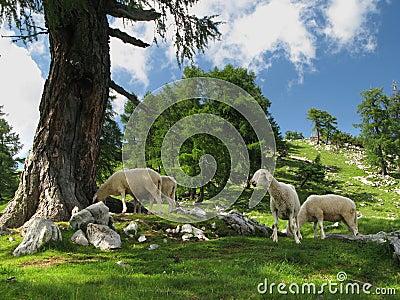 Mountain pasture in Julian Alps