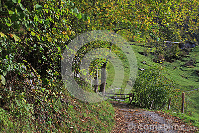 Mountain path in Lauterbrunnen valley in autumn surrounded by trees and plants