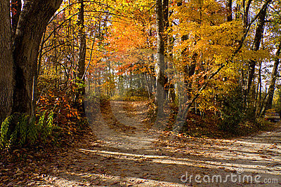 Mountain path near Asheville, North Carolina