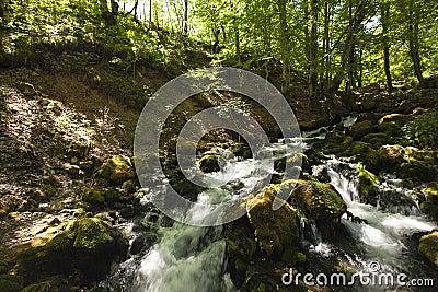 The mountain river