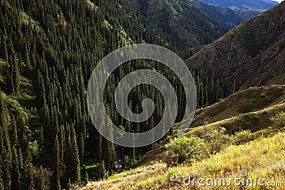 Mountain river gorge