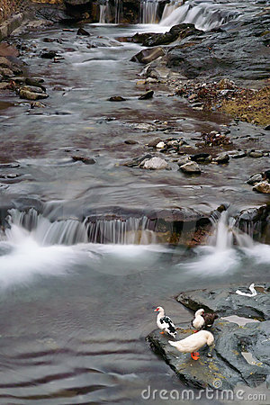 Mountain Stream, Apuan Alps