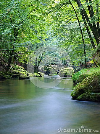 Free Mountain Stream In Fresh Green Leaves Forest After Rainy Day. First Autumn Colors In Evening Sun Rays.The End Of Summer At River Stock Photos - 34993643