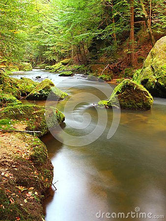 Free Mountain Stream In Fresh Green Leaves Forest After Rainy Day. First Autumn Colors In Evening Sun Rays.The End Of Summer At River Stock Image - 34993831