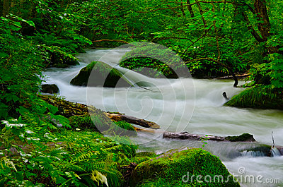 Mountain stream in japan