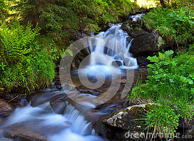 Mountain stream in the woods
