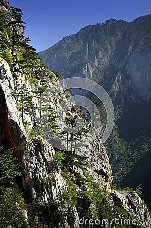 Free Mountain Tree Royalty Free Stock Photos - 10696998
