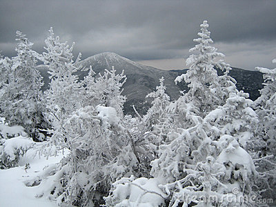 Mountain view in winter, with trees