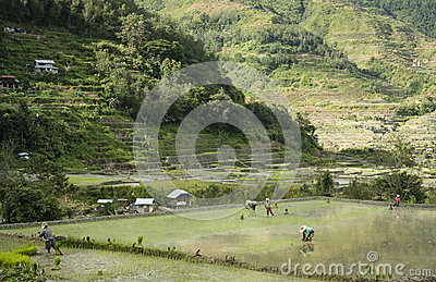 Mountain village people banaue luzon philippines
