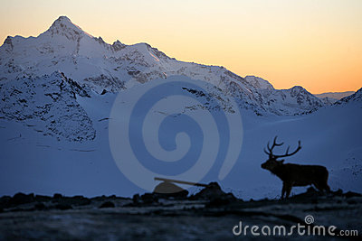 Mountains and deer, Elbrus area