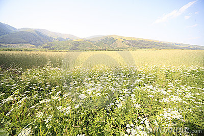 Mountains field