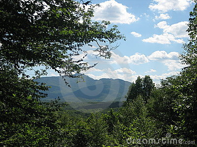 Mountains through the Forest