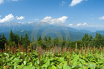 Mountains landscape in Carpathians