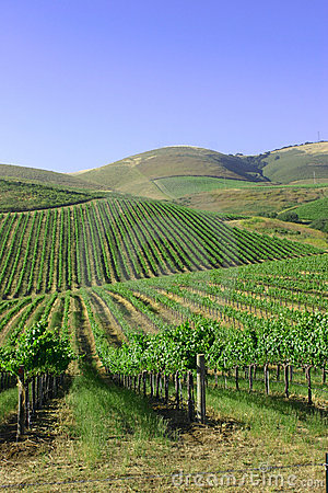 Mountains and vineyards