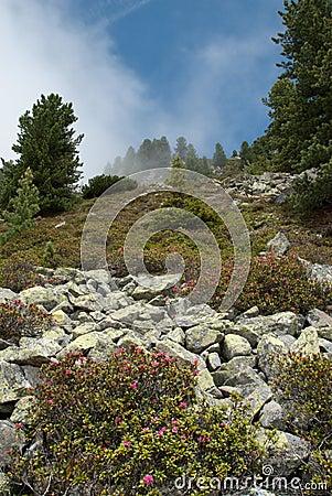 Mountainside in fog at Ochsengarten Austria
