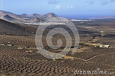 Mountainside vineyards