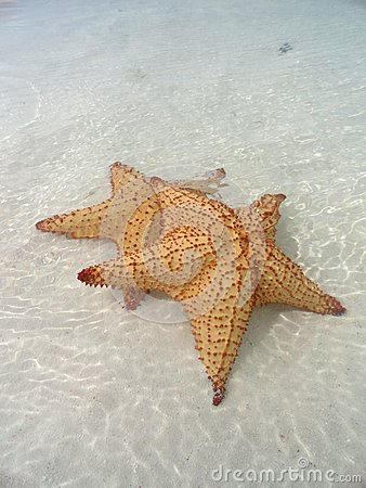 Mounted Starfishes
