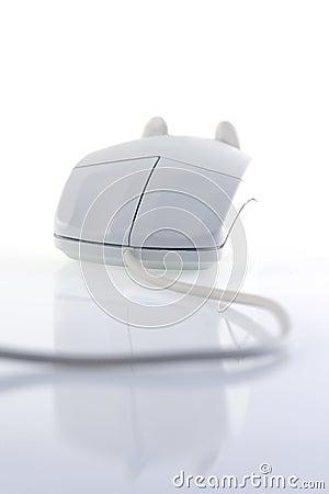 Free Mouse Royalty Free Stock Photos - 4474948
