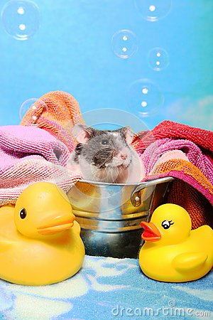 Mouse in a bath tub