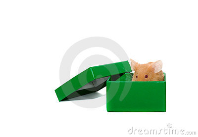 Mouse In A Box. Stock Photography - Image: 3069372