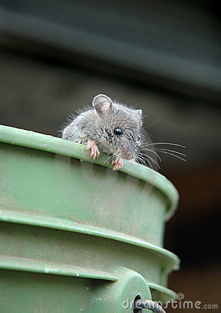 Mouse on bucket