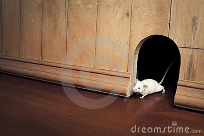 A mouse coming out of it s hole
