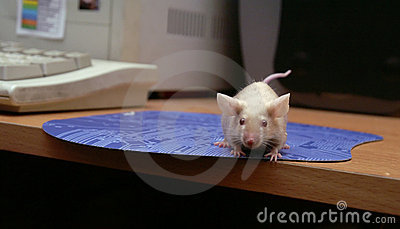 The mouse at the computer, on the mouse-pad