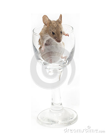 Mouse in a crystal glass