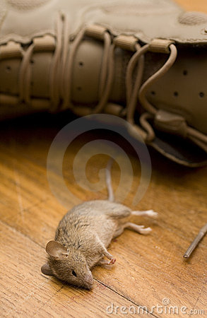 Mouse that died from boot stench