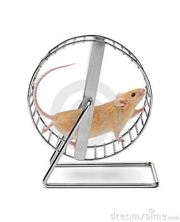 Mouse on Exercise Wheel