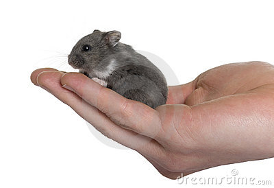 Mouse in a human hand