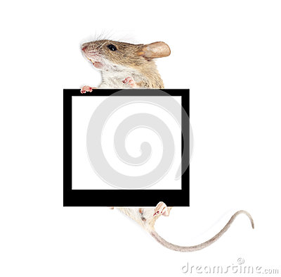 Free Mouse In The Paws Of A Frame Holding Stock Photography - 29420842