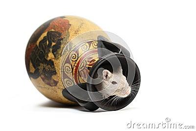 Mouse Inside Vase