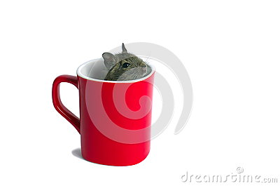 Mouse in a Mug