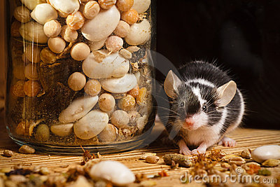Mouse in old basement with herbs
