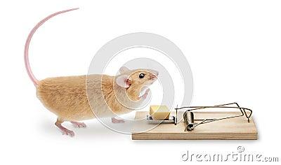 Mouse Trap MouseTrap