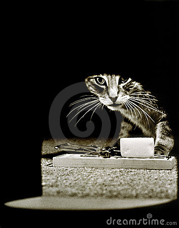 Free Mousetrap Hole Cat Stock Images - 3463604