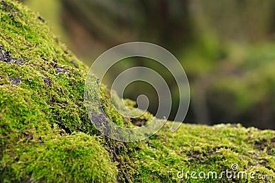 Mousse sur l arbre