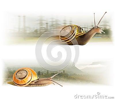 Movement cute snails