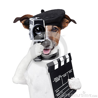 Free Movie Director Dog Stock Photography - 29155962