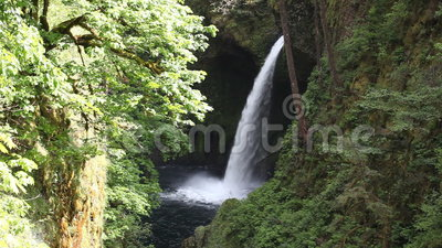 Movie of Metlako Falls on Eagle Creek in the Columbia River Gorge in Hood River County, Oregon United States 1080p. Movie of Metlako Falls on Eagle Creek in the stock video