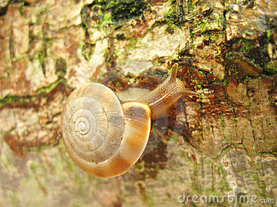 moving Snail