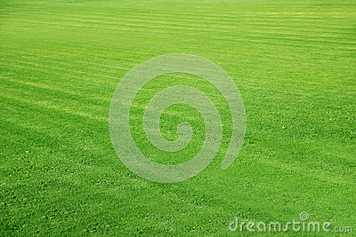 Mowed Football ground, green lawn background