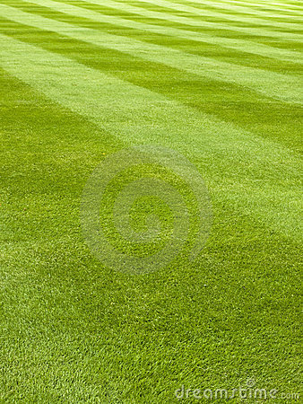 Free Mowed Grass Pattern Royalty Free Stock Photography - 2652217