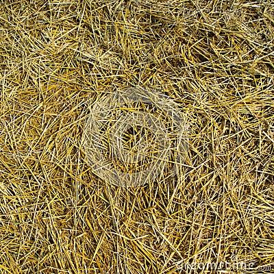 Mowed hay texture