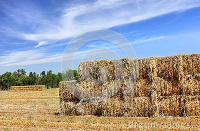 Mown hay harvested in large briquettes on the field