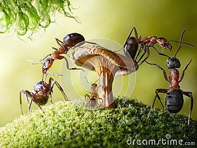 Mrówki dziecka formica myrmica rabusiów bieg bajki