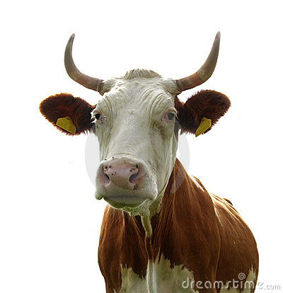 Ms. Cow